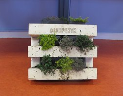 wooden pallets for growing plants